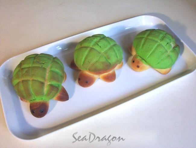 turtle_melonpan10